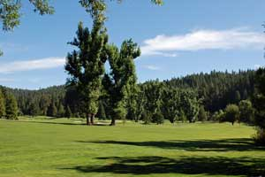 Sequoia Woods golf course, Arnold, CA